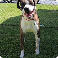 Adopt A Pet :: Benny (Friend) - Edgewater, NJ