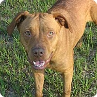 Adopt A Pet :: Jessie - Orange Lake, FL