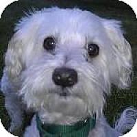 Adopt A Pet :: Sailor - La Costa, CA