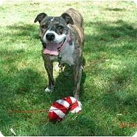 Adopt A Pet :: Tiger Lily - Pittsbugh, PA