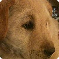 Adopt A Pet :: Pauly - Denver, CO