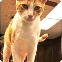 Adopt A Pet :: Clint - Naples, FL