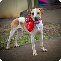 Adopt A Pet :: Highway - Spring Valley, NY