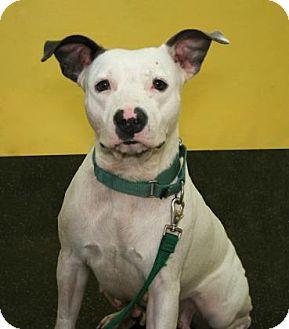 Hound (Unknown Type) Mix Dog for adoption in Bradenton, Florida - Macy