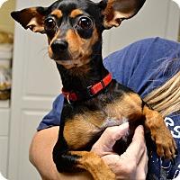 Adopt A Pet :: Princess - Tempe, AZ