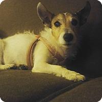 Adopt A Pet :: Billie - Chicago, IL