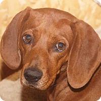 Adopt A Pet :: Letti - Rossville, TN