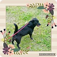 Adopt A Pet :: JuneBug - Media, PA