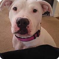 Adopt A Pet :: zzKamie - Dallas, TX