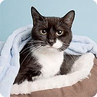 Adopt A Pet :: Trouble - Wilmington, DE
