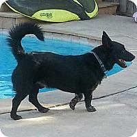 Adopt A Pet :: Oreo - Monrovia, CA
