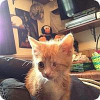 Adopt A Pet :: Mikey - New Egypt, NJ