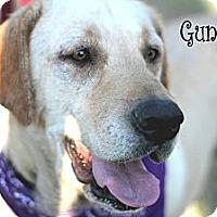 Labrador Retriever Mix Dog for adoption in Wichita Falls, Texas - Gunner