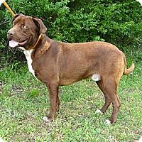 Adopt A Pet :: *Jimmy - PENDING - Westport, CT