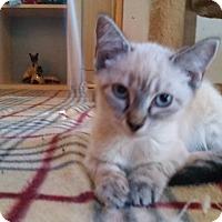 Adopt A Pet :: Avitar - Ocala, FL