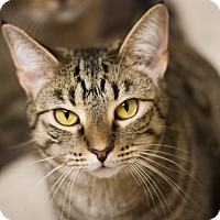 Adopt A Pet :: Kara - Circleville, OH