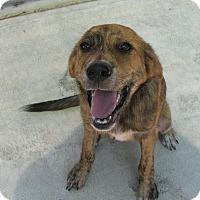 Adopt A Pet :: Chapel - Groton, MA