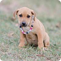 Adopt A Pet :: Gene $250 - Seneca, SC