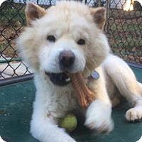 Adopt A Pet :: Fluff - Tucker, GA