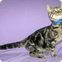 Adopt A Pet :: Kazmir - Powell, OH