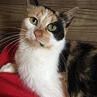 Adopt A Pet :: Katie - Kingwood, TX