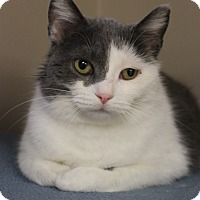 Adopt A Pet :: Honey - Naperville, IL