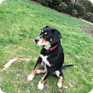 Adopt A Pet :: Shana