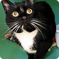 Adopt A Pet :: Murphy - Franklin, NH