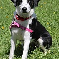 Adopt A Pet :: Shirley - Harrison, NY