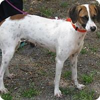 Adopt A Pet :: Josie - Voorhees, NJ