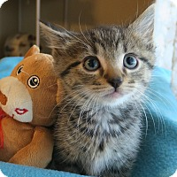 Adopt A Pet :: Billy - Bedford, VA