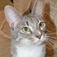 Adopt A Pet :: PASCAL - Capshaw, AL