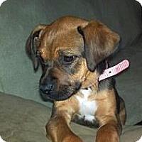 Adopt A Pet :: Phoebe - Hancock, MI