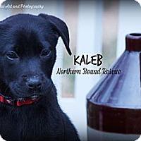 Adopt A Pet :: Kaleb - Southington, CT