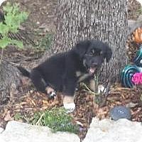 Adopt A Pet :: Peverley - New Boston, NH