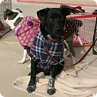 Adopt A Pet :: James - Alamogordo, NM
