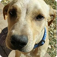 Adopt A Pet :: Buckley - Von Ormy, TX
