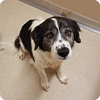 Adopt A Pet :: Jimmy - Naperville, IL