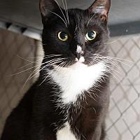 Adopt A Pet :: Lois Lane - Fallbrook, CA