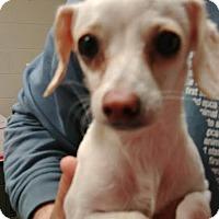 Adopt A Pet :: Scully - Camden, DE