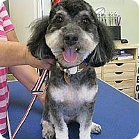 Adopt A Pet :: Kirby - Salem, OR