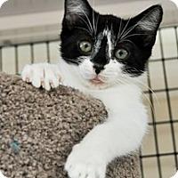 Adopt A Pet :: Burger - Bradenton, FL