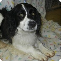 Adopt A Pet :: Dodson ADOPTED!! - Antioch, IL