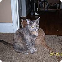 Adopt A Pet :: Callie - Waxhaw, NC
