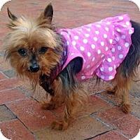 Adopt A Pet :: Elsie - West Palm Beach, FL