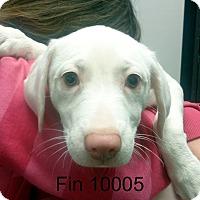 Adopt A Pet :: Fin - baltimore, MD