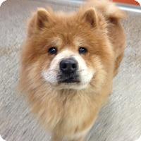 Adopt A Pet :: Piccalilli - Tillsonburg, ON