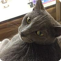 Adopt A Pet :: Indy - Monroe, GA