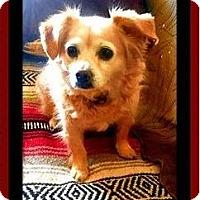 Adopt A Pet :: Amber Lynn - Rancho Cucamonga, CA