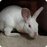Adopt A Pet :: Mulberry - Williston, FL